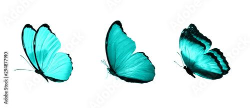 Fotografia, Obraz blue flying tropical butterflies
