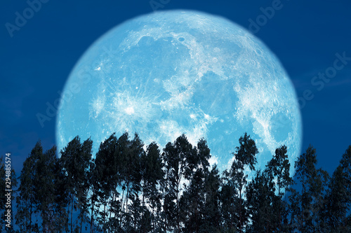 Photo super sturgeon moon on red night sky back silhouette pines