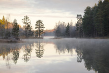 Forest By Lake In Lotorp, Sweden