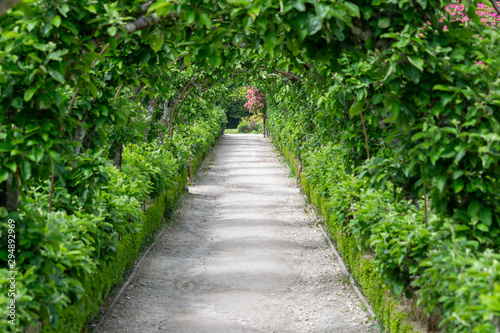 Garden footpath with plants growing over the top of the avenue Canvas Print