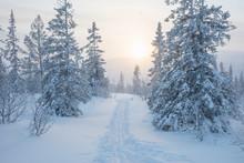 Ski Track Between Trees