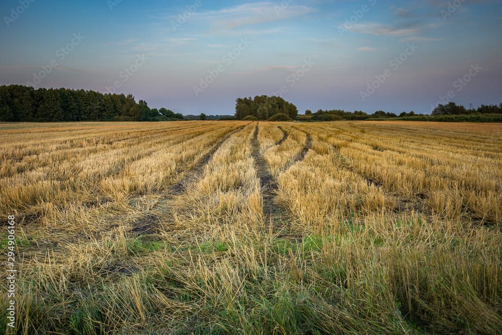 Fototapeta Wheel tracks on stubble field and evening sky
