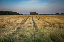 Wheel Tracks On Stubble Field And Evening Sky