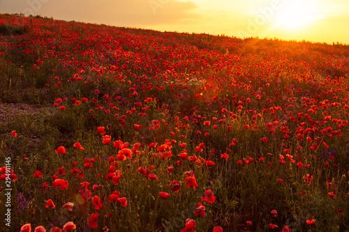 Foto op Plexiglas Weide, Moeras Poppy field at sunset, warm light