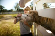 Boy Stroking A Horse Through A Fence.