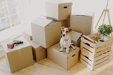 Top View Of Domestic Animal Dog Poses On Cardboard Boxes With Personal Stuff, Poses In Flat Where Repairing Is, Drill And Wooden Box With Indoor Plant And Book Near, Big Window In Background