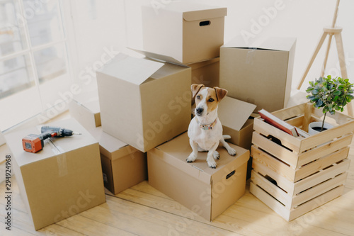 Photo Top view of domestic animal dog poses on cardboard boxes with personal stuff, po