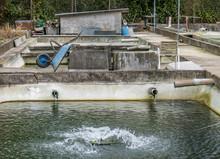 Fischzucht Becken
