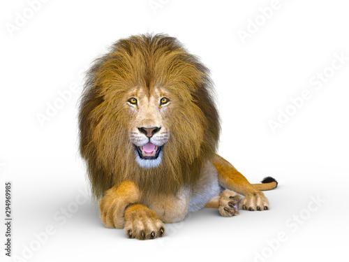 Fotomural  ライオン