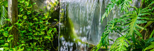 Streaming Waterfall With Green Leaves And Plants In A Tropical Jungle Scenery, Exotic Nature Background