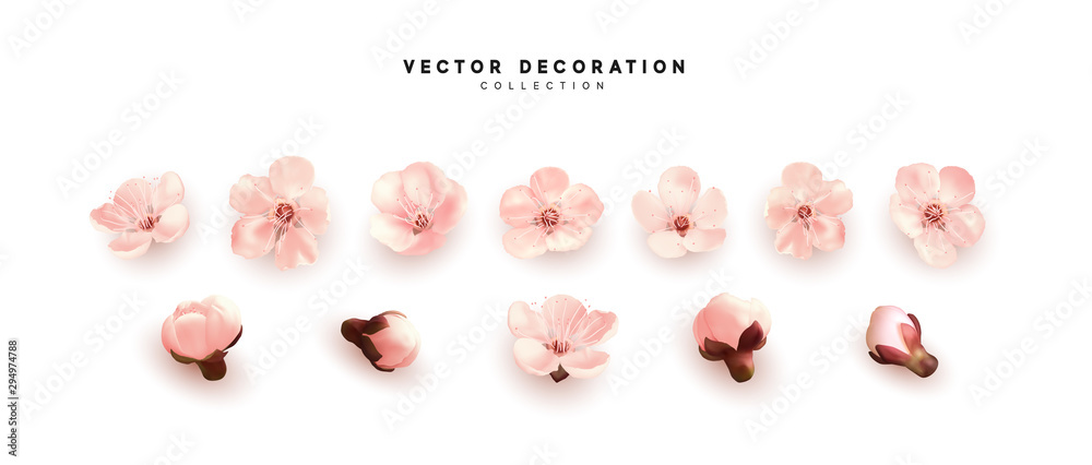 Fototapety, obrazy: Flower flowering against isolated on white background. Blooming flower buds. Design of realistic pink floral buds.