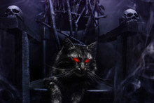 Evil Cat On Witch Throne Made ...