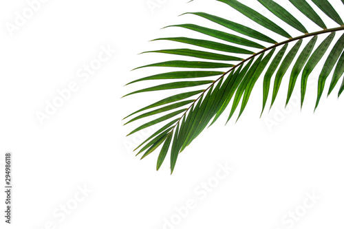 Arbre leaves of coconut isolated on white background
