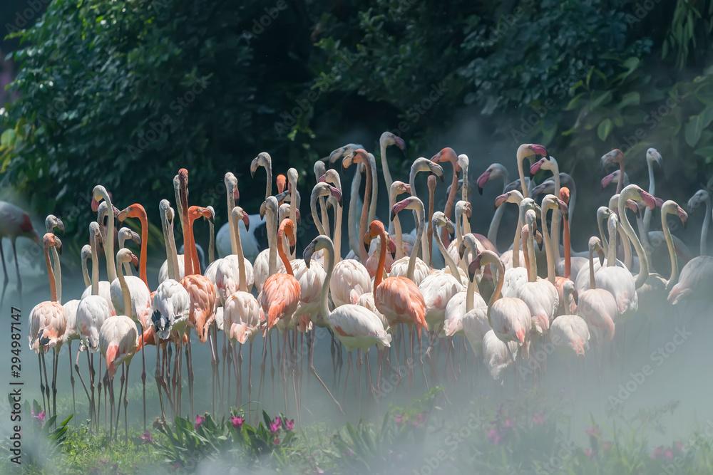 Fototapety, obrazy: Flamingo birds standing in lake