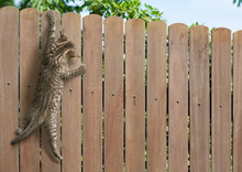 Funny Kitten Hanging On Fence