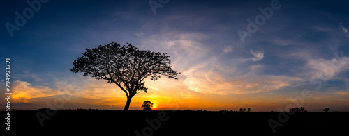 Платно Panorama silhouette tree in africa with sunset