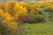 Fall foilage in a valley