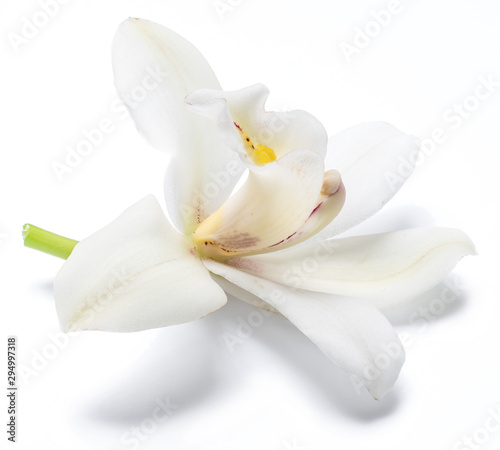 Fototapeta Vanilla orchid vanilla flower isolated on white background. obraz