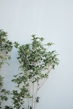Green Leafed Plant Branches Near White Wall