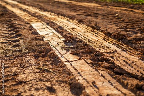 Fotomural  Wheel track on wet soil or mud