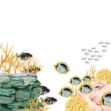 サンゴ礁と海水魚02