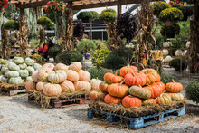 Pumpkins At The Farmers Market...
