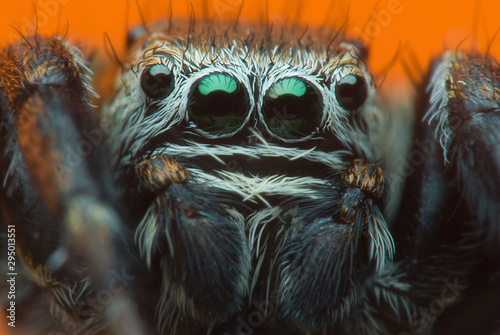 Photo sur Toile Croquis dessinés à la main des animaux Jumping spider on bright background in nature