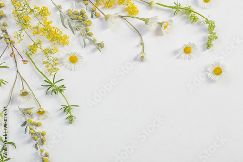 Spoed Fotobehang Bloemen wildflowers on white paper background