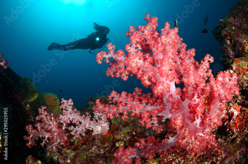 Photo Stands Coral reefs Diver