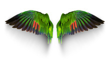 Pairs Of Angle Wings Or Parrot Wings Isolate With Clipping Path On White Background