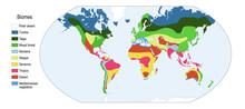 Biomes. World Map