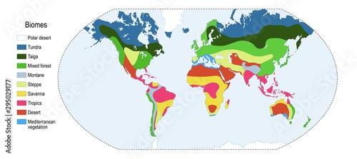 Fotografie, Tablou  Biomes. world map