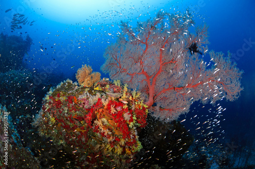 Poster Coral reefs Seafan