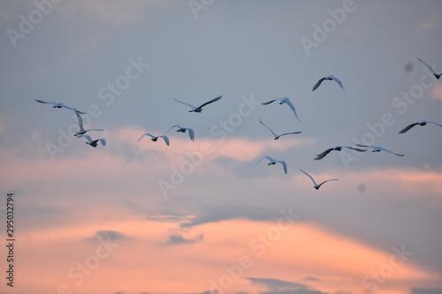 flock of birds flying in the blue sky