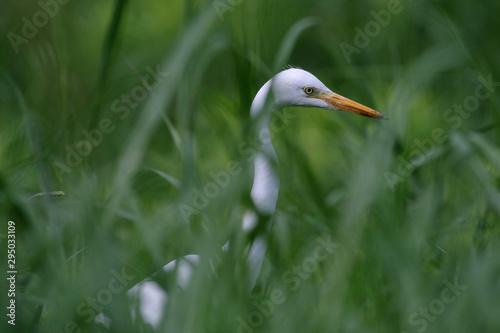 Photo egret in grass