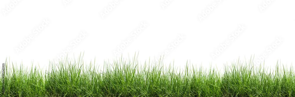 Fototapeta Grass isolated on white background