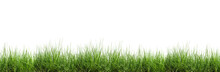 Grass Isolated On White Backgr...