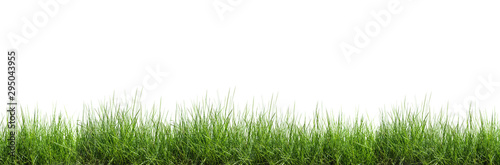 Photo Grass isolated on white background