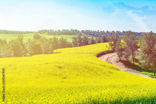 Foto auf Gartenposter Gelb agricultural field with yellow rape