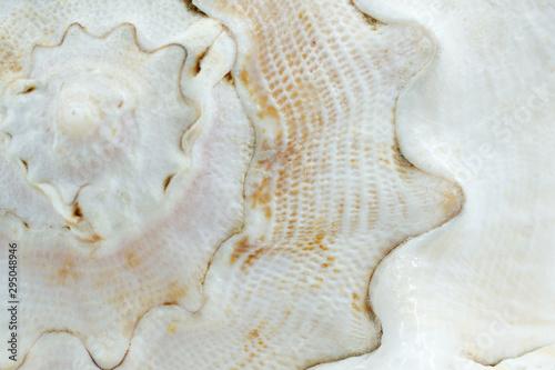 Obraz na plátně Texture of a white seashell close-up, sea shell macro