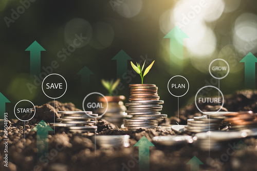 Fotomural The seedlings are growing on the coins placed on the ground, thinking about financial growth