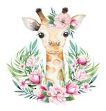 Plakat z małą żyrafą. Ilustracja kreskówka żyrafa akwarela zwierząt. Egzotyczny letni nadruk w dżungli. - 295055770