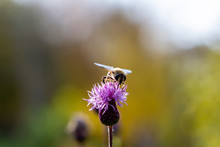 Flower, Bee, Insect, Nature, T...