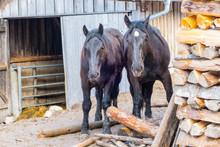 Arbeitspferde Bauernhof Bayern