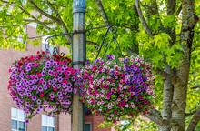 Colorful Flower Pots On City Street