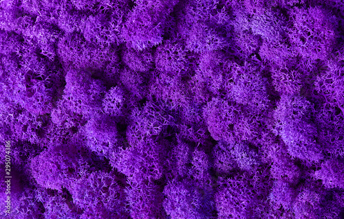 Door stickers Macro photography Macro of violet decorative moss texture