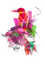 Tropical Bird, Painted In Wate...