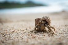 Hermit Crab On The Beach 2