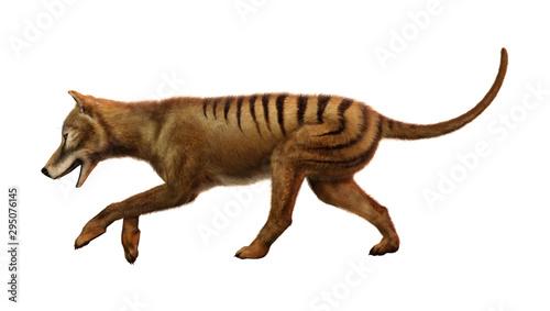 3D Rendering Thylacine on White Fototapet