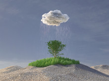Rain Cloud Watering A Green Tr...